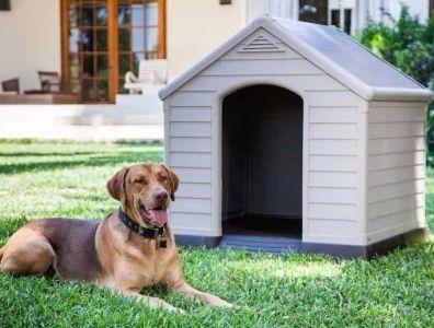 Casas de Perro