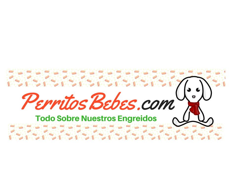 Perritos Bebes y Cachorros: Las Mejores Imágenes