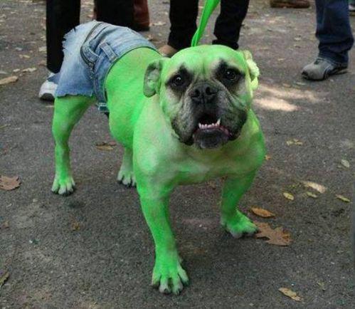 perro traje de hulk