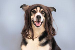 cortadora de pelo para perros