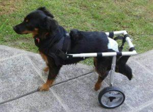 silla de ruedas para perros