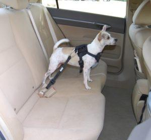 cinturon de proteccion para el perro