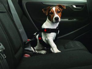 perro con cinturon de seguridad en los carros