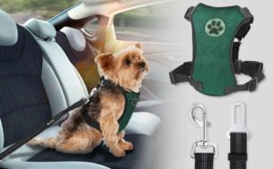 sistema de seguridad efectivo para los perros de la casa