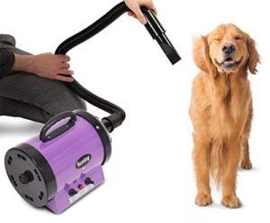 secador para el pelo de los perros