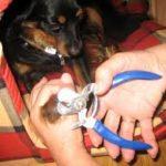 Mejores Cortaúñas para Perros del 2020