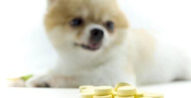 anticonceptvos para perros diversos